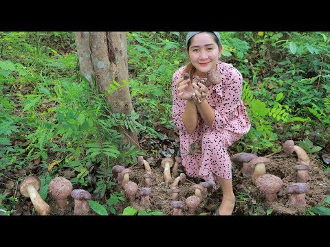 Yummy Wild Mushroom Cooking Chicken Egg - Find Wild Mushroom And Cook - Cooking With Sros