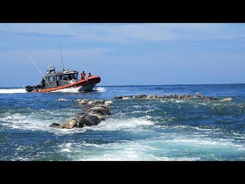 Μεξικό: 300 θαλάσσιες χελώνες βρέθηκαν να επιπλέουν νεκρές…