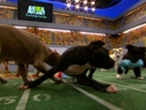 This Year's MVP | Puppy Bowl VIII