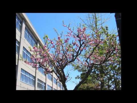札幌市立八軒中学校校歌
