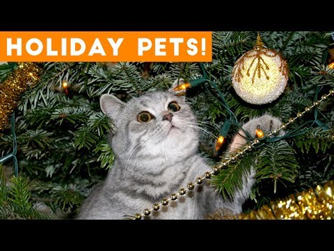 Funny animals - Cutest Holiday Pets Compilation 2018  Funny Pet Videos
