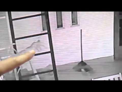 Rắn hổ chui vào máy giặt ở Sài Gòn