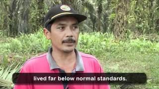 Agriculture - Palm Oil Farming