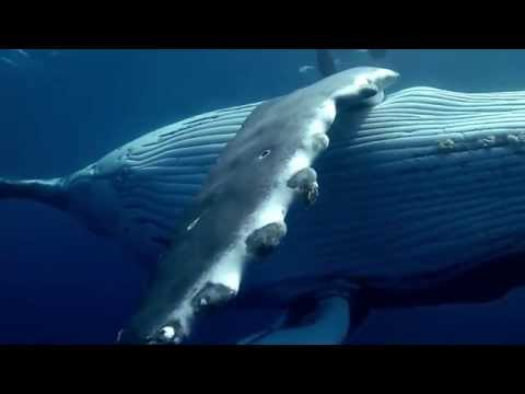 Why We Defend Oceans - Sea Shepherd Conservation Society