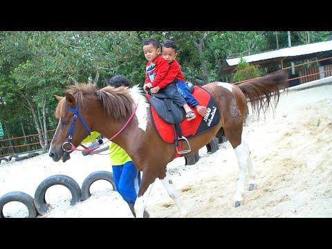 Zafi Naik Kuda Lucu   Kuda Poni   Kuda Delman Lagu Anak