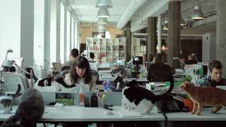 To stay on top of the ever-changing advertising landscape, john st. has opened the world's first cat video division. With production ...