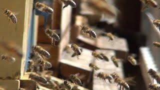 Hogeschool Van Hall Larenstein benoemt Lector Bijengezondheid