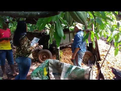 Agricultura e Pecuária em Ouro Preto do Oeste.