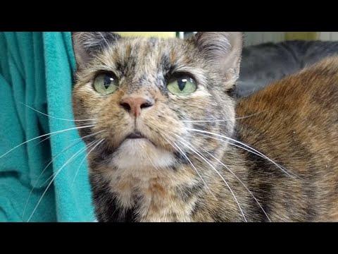 Kitten Close Up 2017-08-16