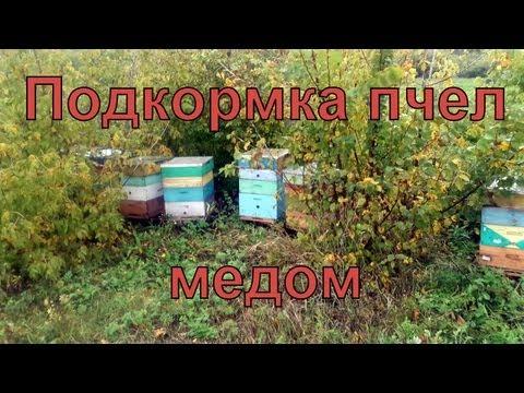 весенняя прикормка для пчел