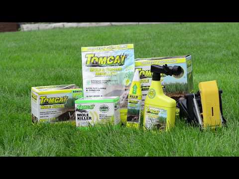 How to Prevent Moles, Vole, and Gophers in Your Yard