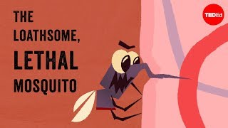 The loathsome, lethal mosquito