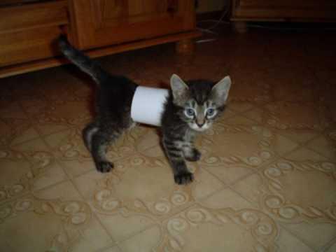 תמונות מצחיקות - תמונות מצחיקות של חתולים.