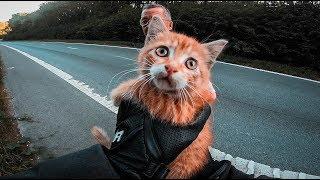 Miły pan na motocyklu ratuje przerażonego kotka