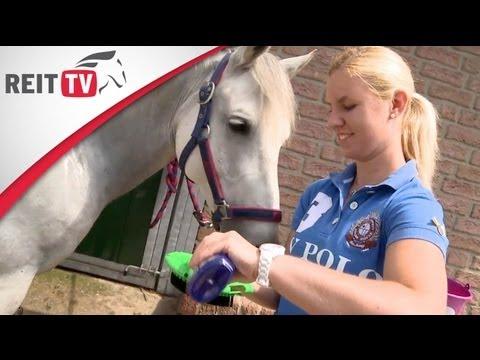 Pferde waschen - so wird der Schimmel wieder weiß