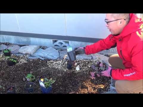 日陰に宿根草を植える