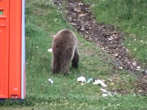 Urs pe Valea Cerbului
