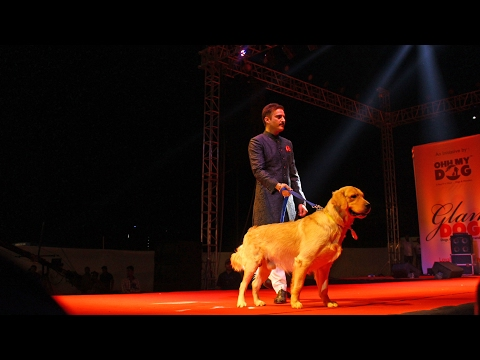 Glam Dogs 2017 | Jimmy Shergill with Golden Retriever | Dogs99.com