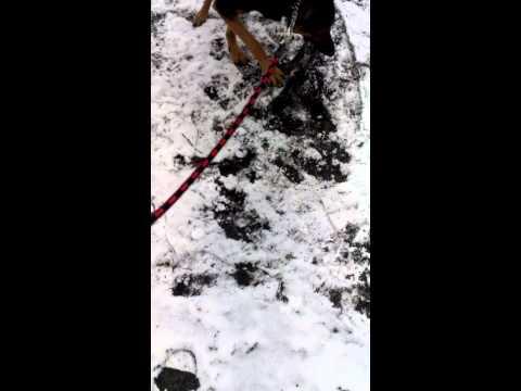 pipinia - Pipinia na sniegu.