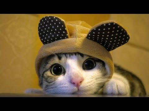 gatti divertentissimi, davvero eccezionali!