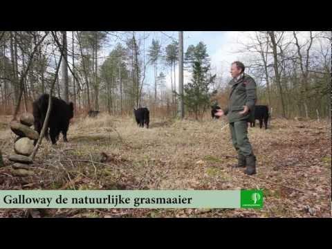 Galloway de natuurlijke grasmaaier