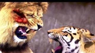 Leon  VS Tigre La Battalla Real