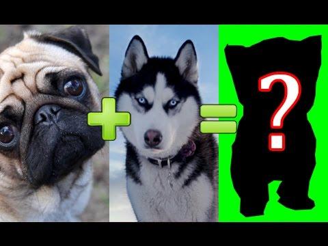 🐩❤️🐕 15 unbelievable cute cross breed dogs pt. 1