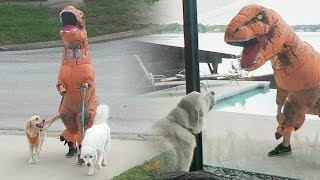 Video T-REX DINOSAUR SUIT PRANK! (Super Cooper Sunday #72) MP3, 3GP, MP4, WEBM, AVI, FLV Desember 2017