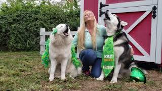 Tonka & Monroe Howling | Happy St Patrick's Day