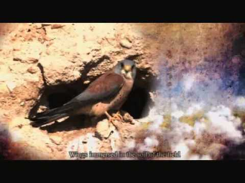 الكليب الغنائي طيور مهاجرة