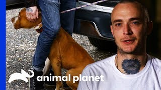 Terrified Dog Found Tied Up Outside A Church | Pit Bulls & Parolees by Animal Planet