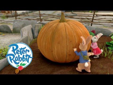 Peter Rabbit - The Great Pumpkin Theft | Cartoons for Kids