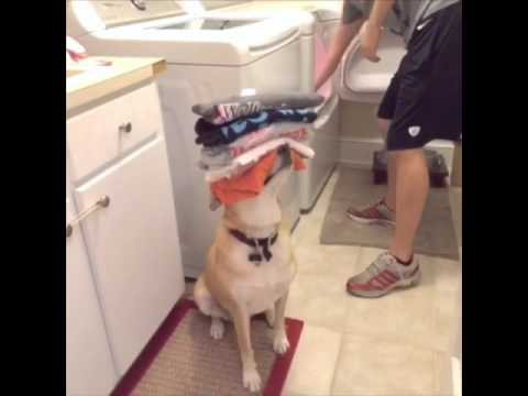 Dog Helps With Chores!