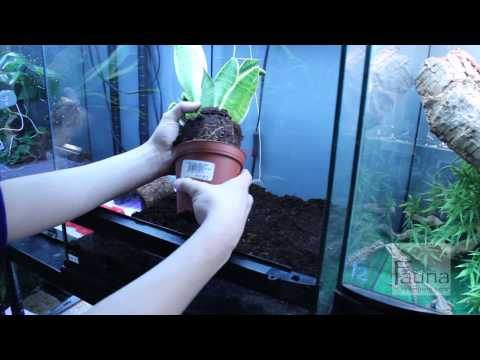 How to set up a Crested Gecko vivarium