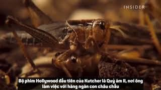 """Cách để côn trùng """"nhập vai"""" trong phim bom tấn của Hollywood"""