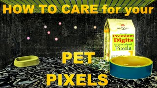 Short and Informative Tutorial about the Best Care for your Pet Pixels
