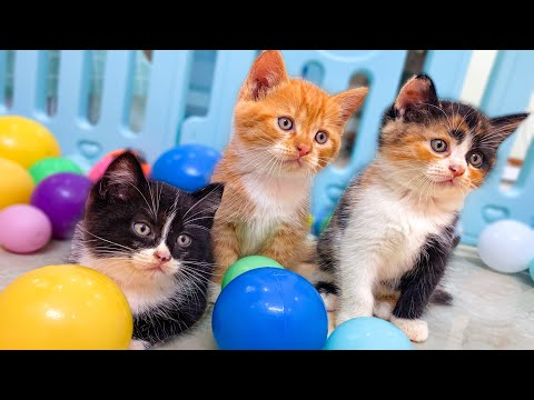 Cute Kittens Playing with Ball Pit