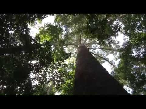 Hutan Lindung Sungai Lesan