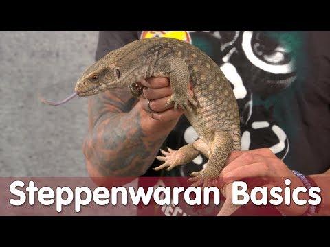 Reptil TV - Folge 104 - Steppenwaran Basic (видео)