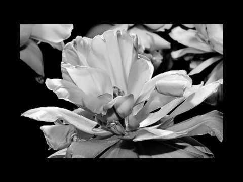 Tekst piosenki Brandi Carlile - Heaven po polsku