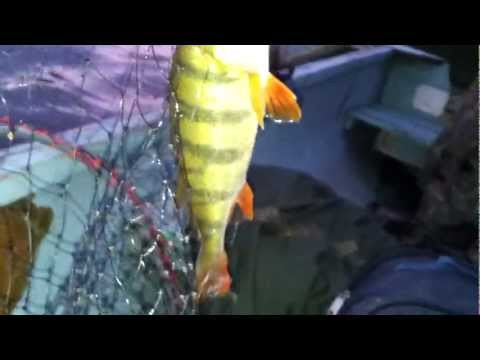 Perch on sammy 65 part  2 (видео)