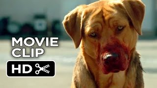 Nonton White God Movie Clip   Dog Pack  2014    Drama Hd Film Subtitle Indonesia Streaming Movie Download