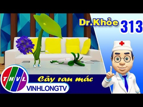 THVL | Dr. Khỏe – Tập 313: Cây rau mác - Phần 2 - Thời lượng: 4 phút, 37 giây.
