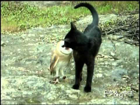 貓和貓頭鷹變成最佳玩伴