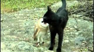 Необычная дружба совы и кошки