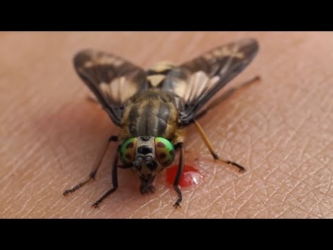 Top 10 Most Annoying Insects