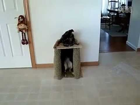 超乖狗狗吃飯真規矩,把我家的小孩都比下去了!