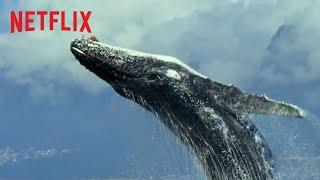 Nuestro Planeta | Tráiler Oficial Extendido HD | Netflix