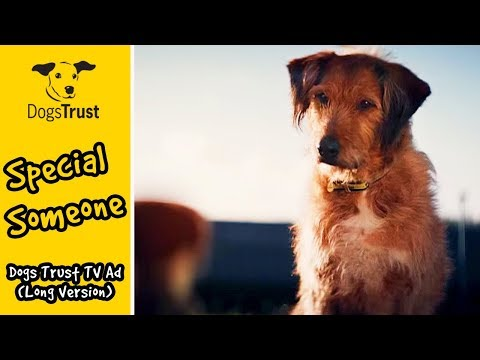 Dogs Trust - #specialsomeone