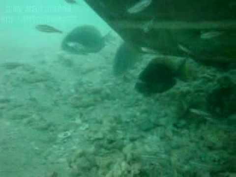 Mergulho-Praia do francês-ALAGOAS